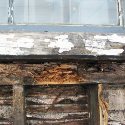 Wet Rot found in wooden wall structure as part of a building restoration.