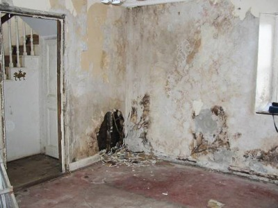 Rising Damp Effects